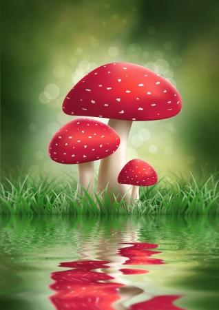 fly agaric: Fly Agaric Mushroom. illustration.