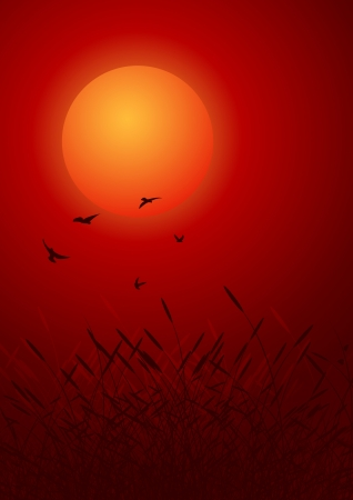 bulrush: birds on red sunset. decorative background Illustration