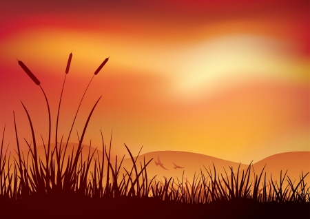 bulrush: Marshland sunset. Vector illustration. Elements are layered separately in vector file. CMYK color mode.