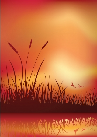 bulrush: sunset in marshland. Vector illustration. Elements are layered separately in vector file. CMYK color mode. Illustration