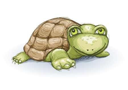 tortoise: Vector turtle sketch  colored