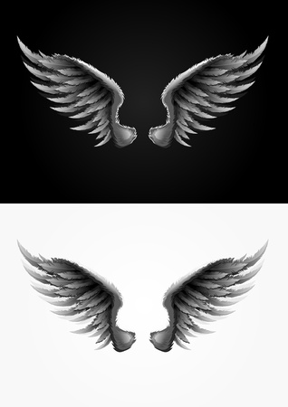 spread wings: Highly detailed vector wings illustration  One color used  Easy editable  Illustration