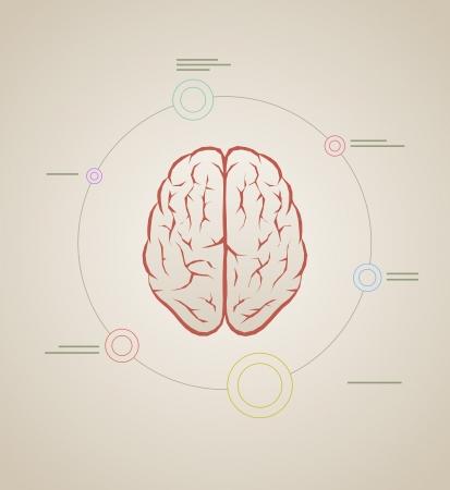 Vector brain inforaphic template   Stock Vector - 22440833