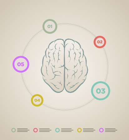 Vector brain inforaphic template   Stock Vector - 22440831