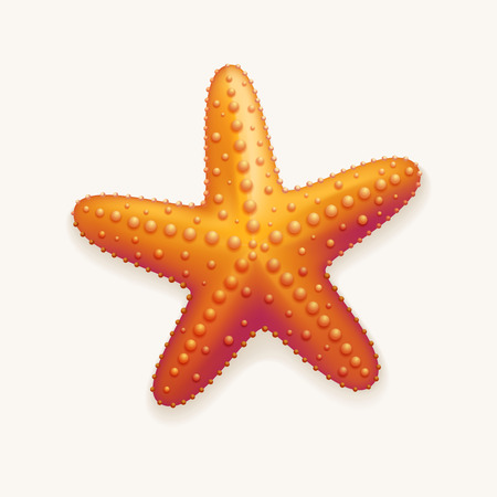 starfish beach: Detailed vector illustration of starfish  Elements are layered separately in vector file