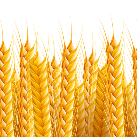 Vector realistic seamless wheat background illustration.