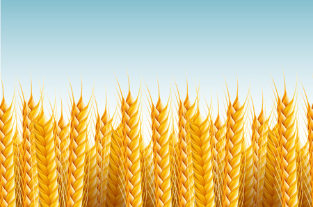 wheat harvest: realistic seamless wheat background illustration. Illustration