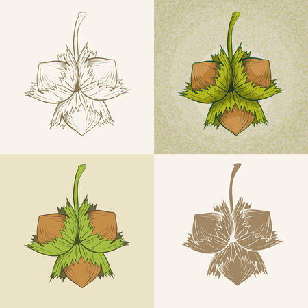 Vector hand drawn hazelnut illustration set  Vector