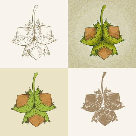 Vector hand drawn hazelnut illustration set