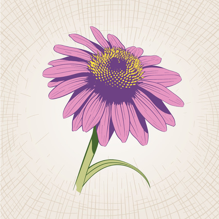 etched: Vector hand drawn flower. Global color CMYK.