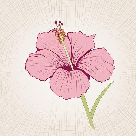 flower  hand: Vector hand drawn hibiscus flower. Global color CMYK. Illustration