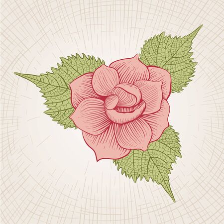 flower  hand: Vector hand drawn rose flower. Global color CMYK.