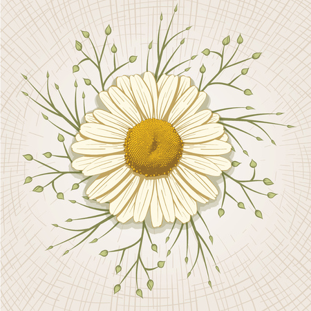 flower petals: Vector hand drawn daisy. Global color CMYK.