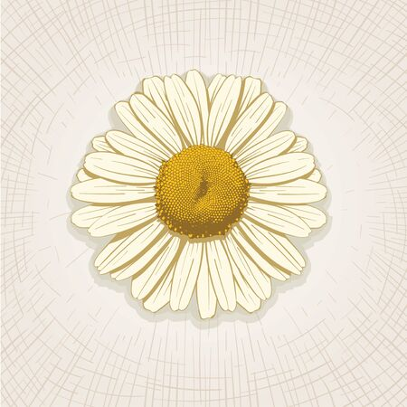 etched: Vector hand drawn daisy flower. Global color CMYK.