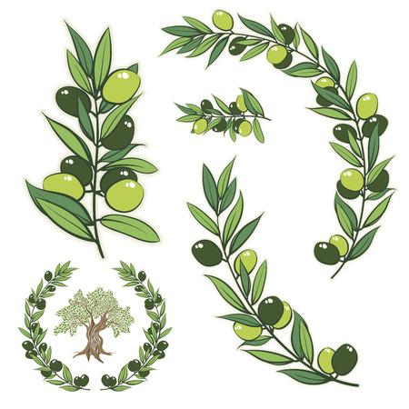 cadre avec branche d'olivier. Main cadre de cercle dessiné illustration avec olivier.