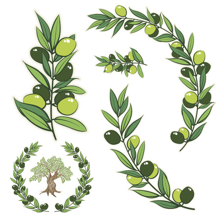 frame with olive branch. Hand drawn circle frame illustration with olive tree.