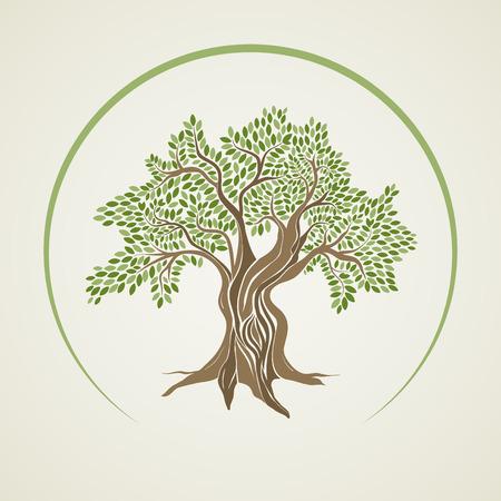 Olijfboom illustratie.