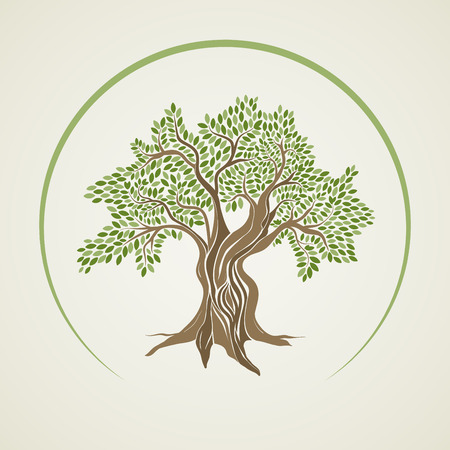 Olive tree illustration. Banque d'images - 57606001