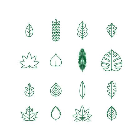 leaf line: various line leaf icon collection Illustration