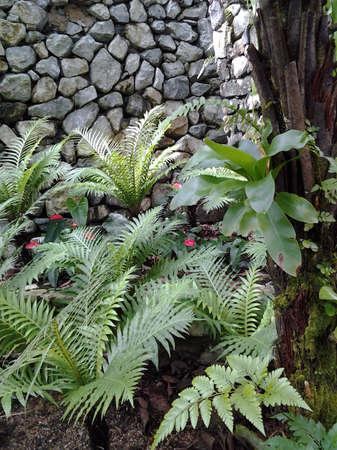 botanika: Botanika