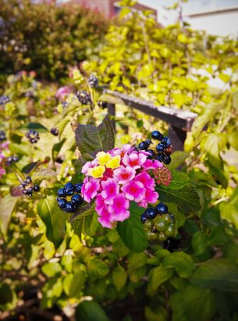 Portrait of flowers and berries healthily growing. Stock Photo