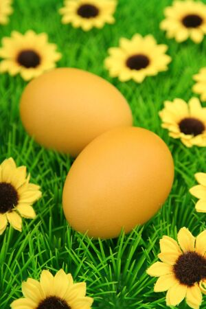Easter eggs on grass photo