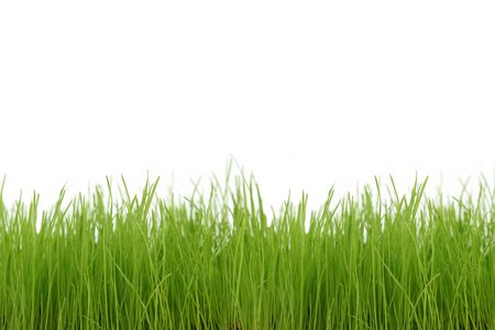 Green grass Stock Photo - 471801