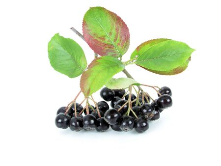 Black Chokeberry (Aronia) photo