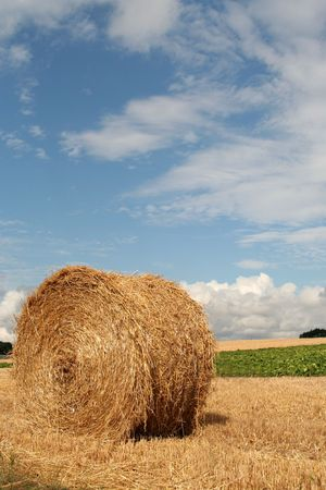 Hay bale in harvested wheat field, Denmark photo