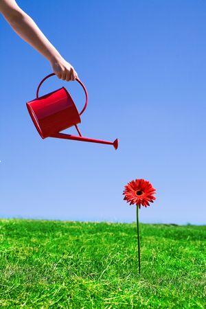 regando plantas: Mujer regando flores