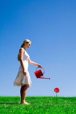 regando plantas: Mujer regando margaritas de color rojo Foto de archivo