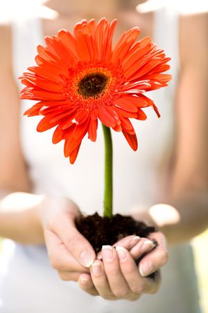Woman holding flower in dirt photo