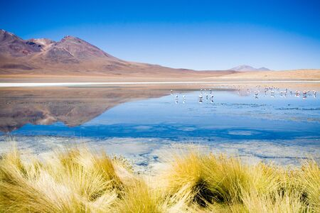Laguna Blanca, Bolivia photo