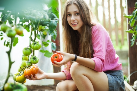 crouching: Woman picking fresh tomatoes