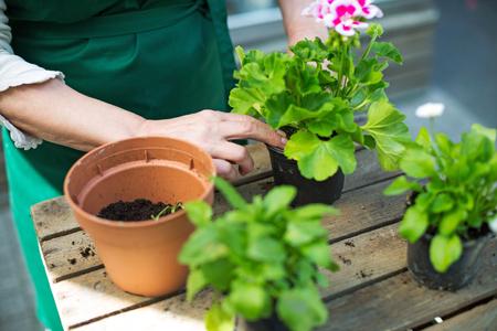 Tuinlieden handen planten bloemen in pot