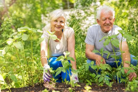 Glimlachende gelukkige oudere paar tuinieren Stockfoto