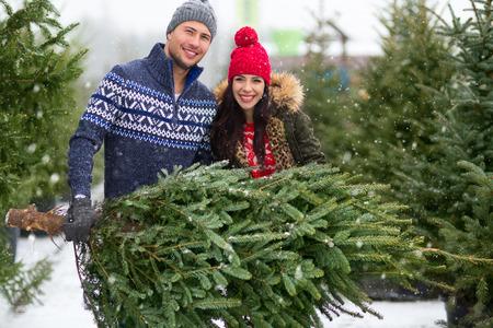 Couple buying Christmas tree 스톡 콘텐츠