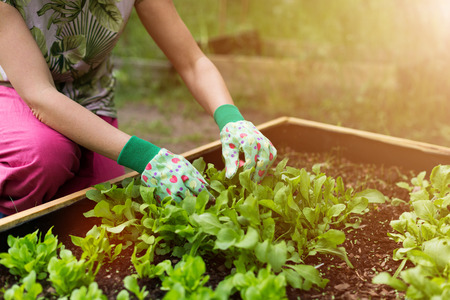 Close up of a woman gardening