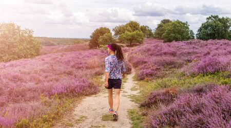 A female hiking along heather covered hills, Hoge Veluwe, Netherlands Stock Photo