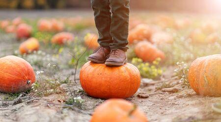 Boy standing on pumpkin in pumpkin patch