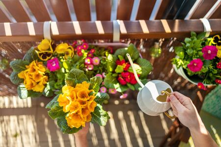 Young woman taking care of her plants on the balcony Banco de Imagens