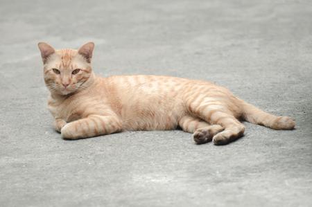 Brown cat lying on a concrete road surfaces. Фото со стока