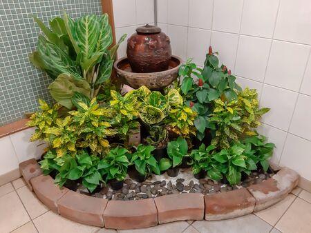 House plants Indoor plants design