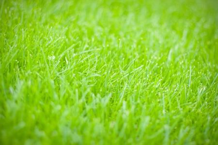 green grass in citys park in Kiev