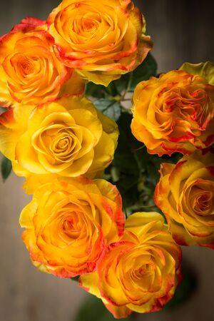 rosas naranjas: unas rosas de color naranja en la belleza del estudio