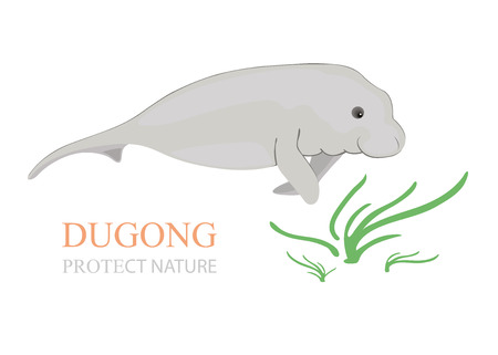 manatee: Sea cow dugong dugong with sea grass on white background.
