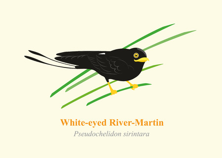 endangered: Swallow bird, River martins White-eyed River-Martin cartoon vector.