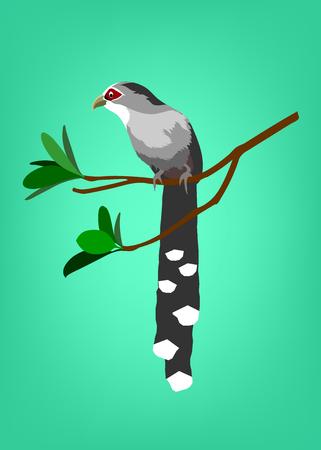A vector cartoon of bird (Green-billed Malkoha, Phaenicophaeus tristis). Ilustração
