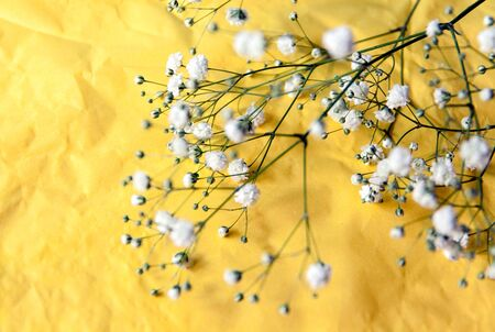 odorous: small white flowers on yellow background