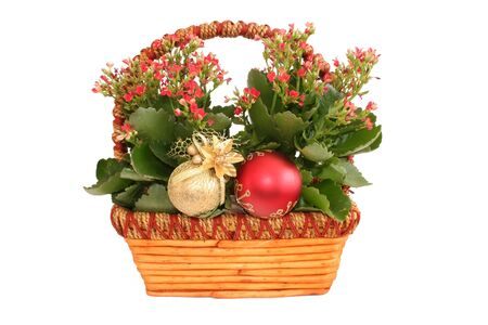 Beautiful plant detail in a basket with christmas decorations.